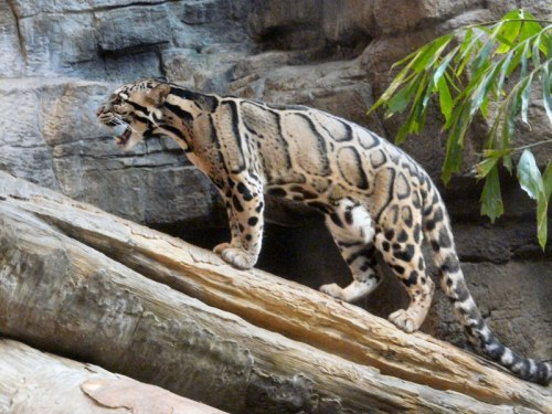 dar Senchal-wildlife-sanctuary-5