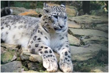 dar zoo snow