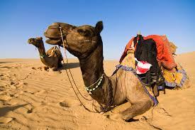 jod camel 3
