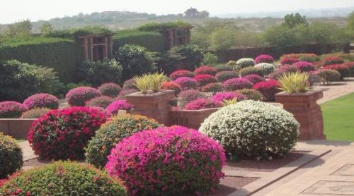 jod Umed Garden1