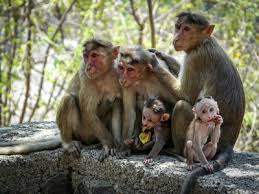 mum ele monkeys