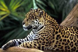 mum zoo leopard