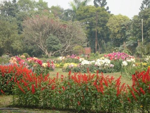 dhaki-botanical_garden_dhaka_bangladesh_1