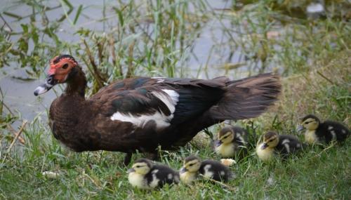 ka-centralpark-kaohsiung-birds