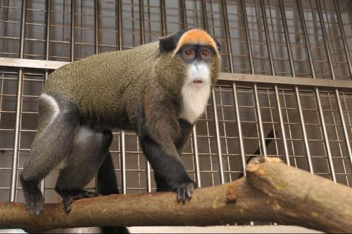 hong-zoo-monkey
