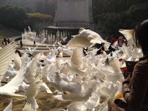 nan-open-air-music-hall-incredible-number-of-doves