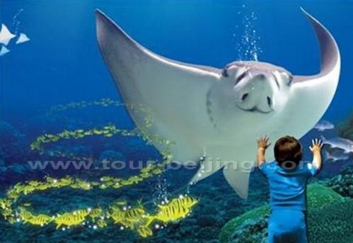 shang-shanghai-ocean-aquarium