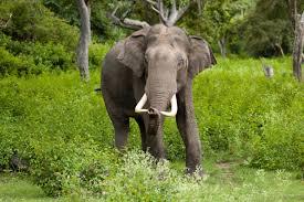 tia-zoo-elephant