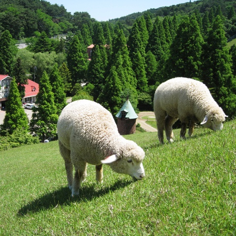 kob-pasture