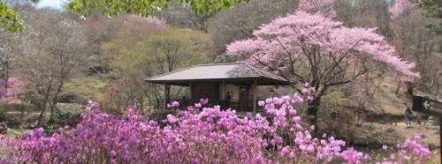 kob-rokko-alpine-garden