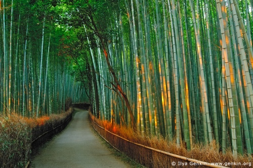 ky-arashiyama-kyoto-japan