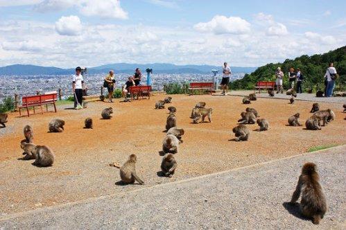ky-monkey-park