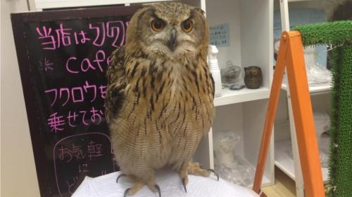 ky-owl-family-2