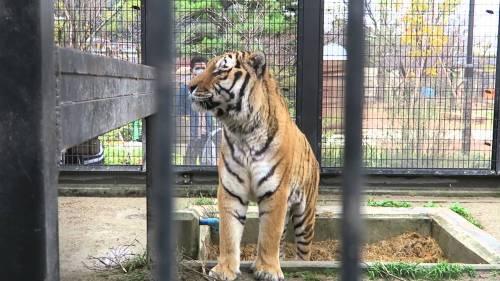 ky-zoo