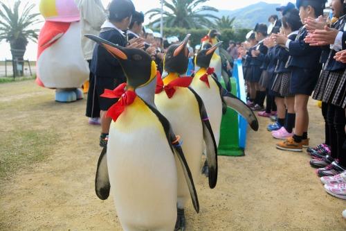 na-penguin-park-2