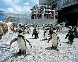 na-penguin-park-4
