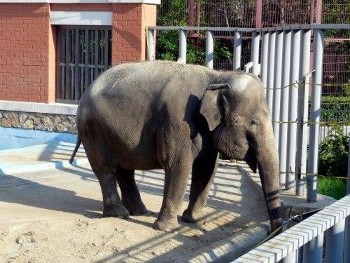 ark-zoo-elephant