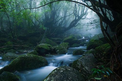 oki-yakushima-island-forest