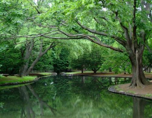 sap-maruyami-forest