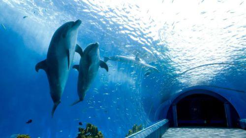 yoko-aqua-dolphins