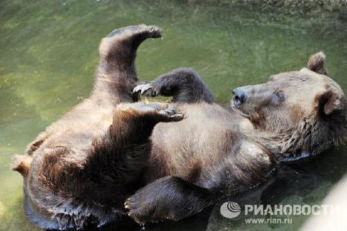 mos-zoo-bear