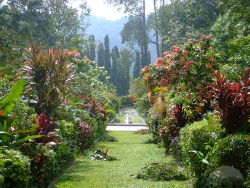 yer-botanical