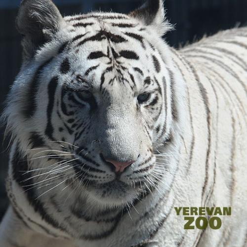 yer-zoo-2