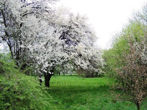 The Botanical Garden tourism destinations