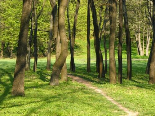 mol-valley-trees