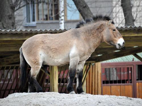 mol-zoo-horse