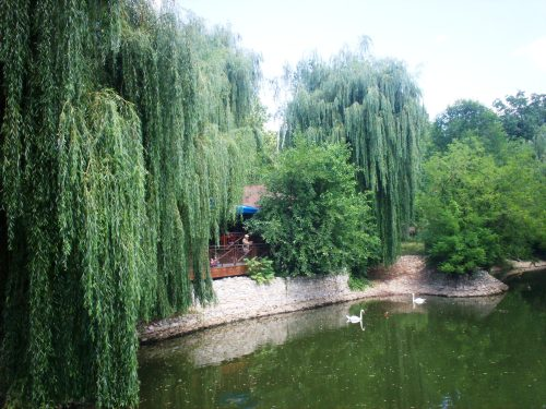 mol-zoo-pond-2