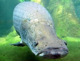 tash-zoo-aquarium