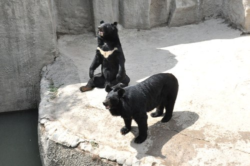 tash-zoo-malaysian