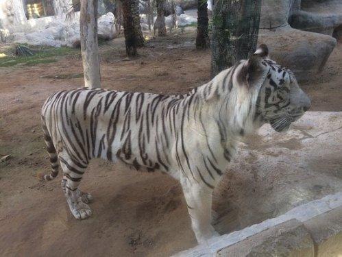abu zoo 4