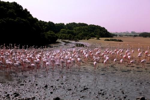 dub flamingos