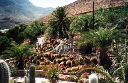 can cactus 2