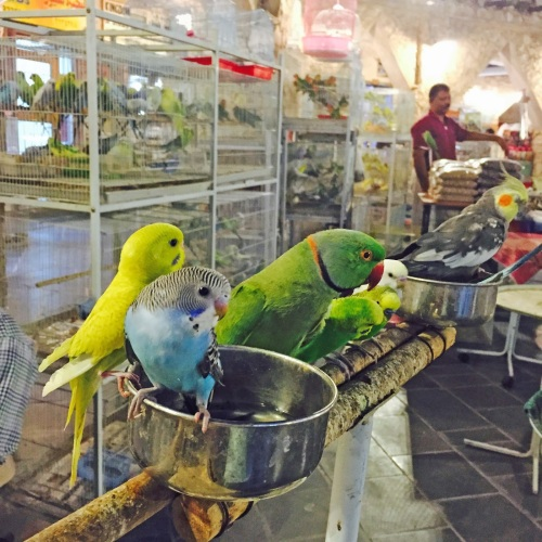 qatar bird