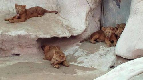 qatar zoo 2