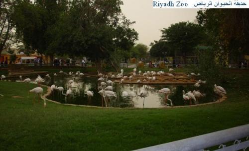 riy zoo 2