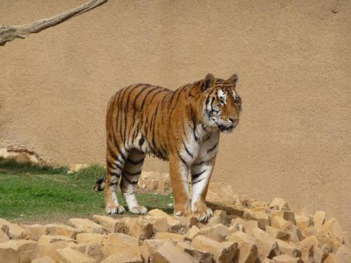riy zoo