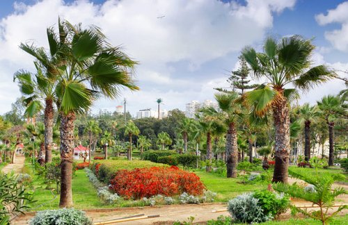 alex montazah garden
