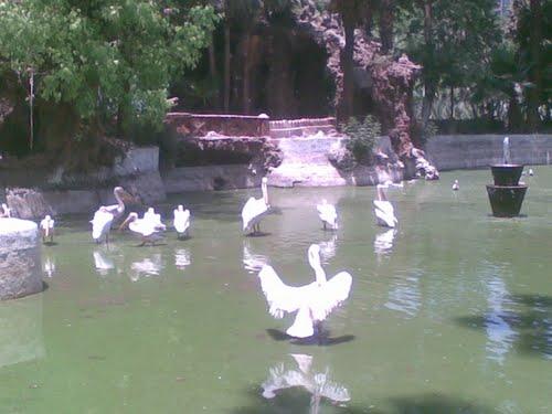 cairo zoo bird lake