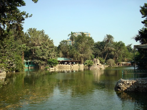 cairo zoo tea island lake
