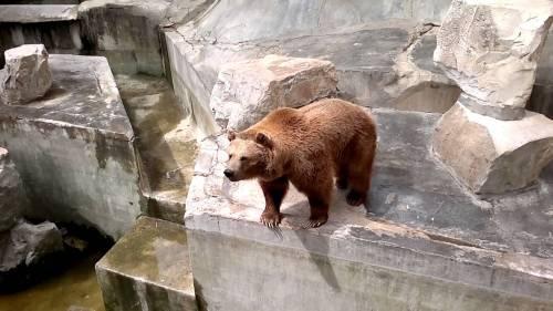 tunis zoo