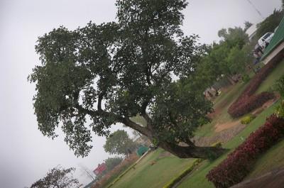 abuja arboretorium