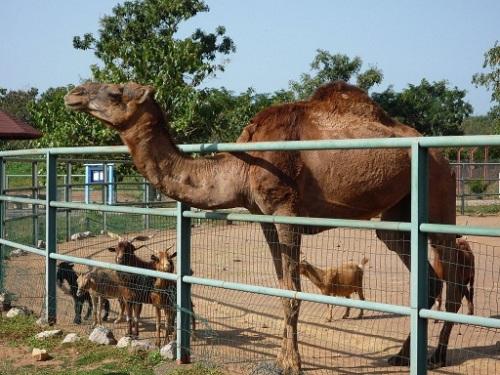 abuja zoo