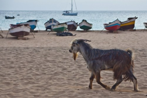 cape maio villa goat
