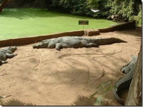 gambia crocs 3