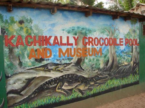 gambia crocs