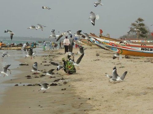 gambia tanji birds